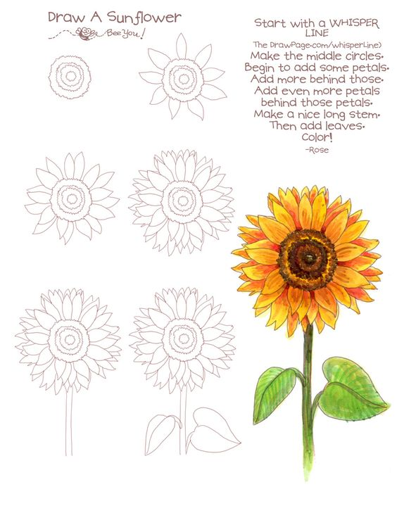 bullet journal doodles - sunflower more detailed drawing