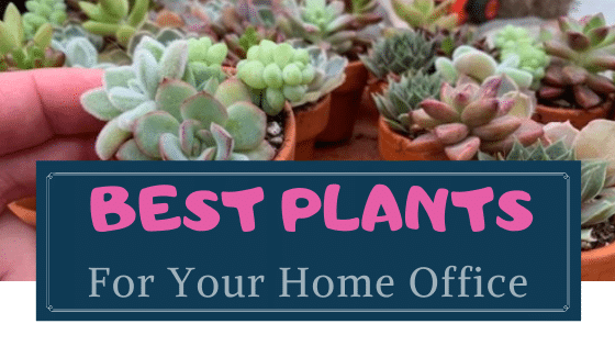 best plants for home office